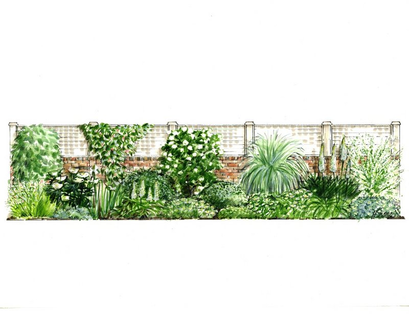 Sample Front Elevation Landscaping : Garden borders illustration society of architectural